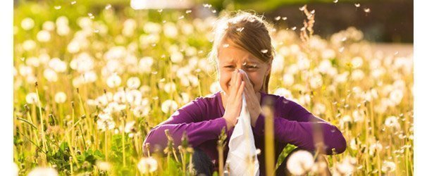 Natural honey helps against hay fever